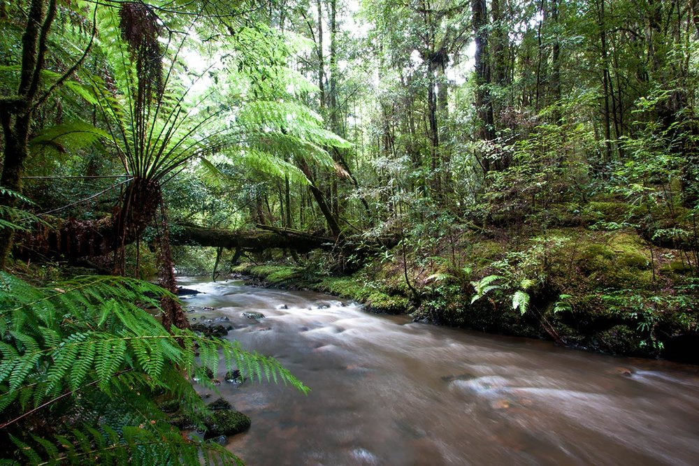 river rushing through fern and tree lined rainforest