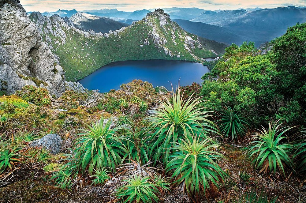 view of crater lake with spiky plants - part of cradle mountain national park