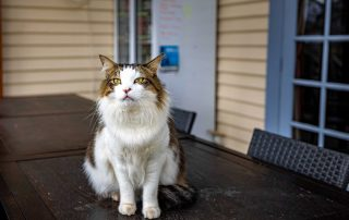 cradle mountain hotel reviews - Howard the boss cat, pet-friendly accommodation