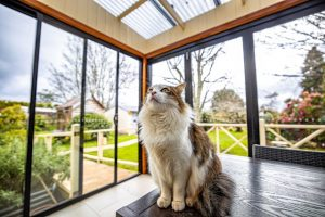 b and b cradle mountain - glass enclosed deck with Howard the cat