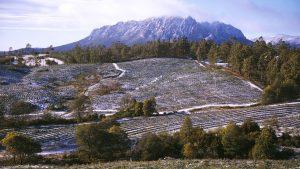 cradle mountain b&b - snow covered fields around sheffield tasmania
