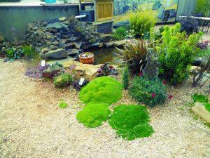 pond and flower garden
