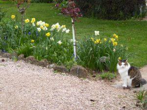 things to do in tasmania in spring - Glencoe Country B&B Howard the cat